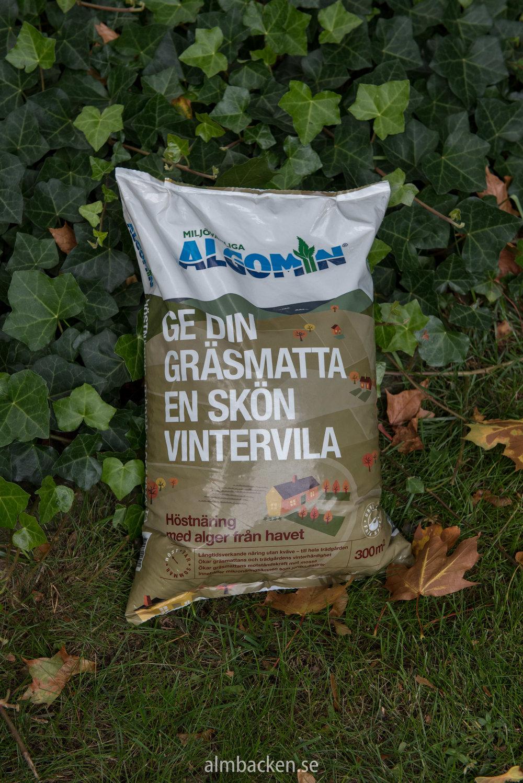 Algomin-Almbacken.jpg