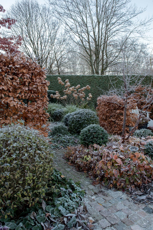 almbacken-tradgardsdesign-formklippt-hortensia-limelight-kopparlonn.jpg