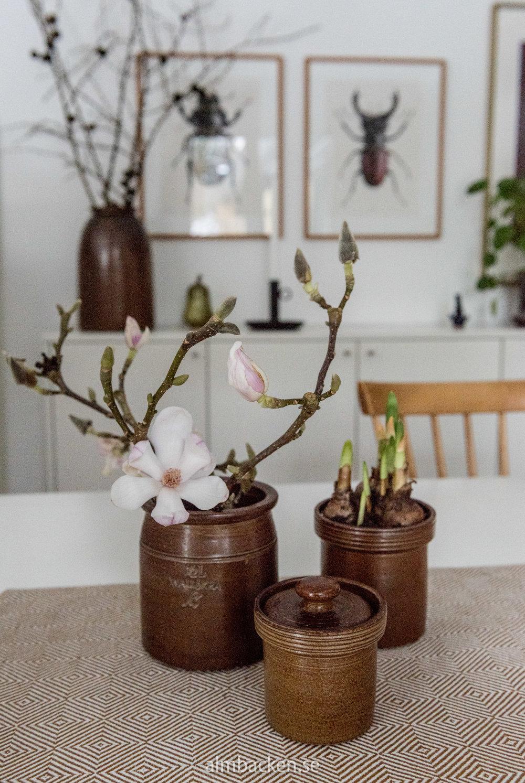 magnolia-wallakra.jpg