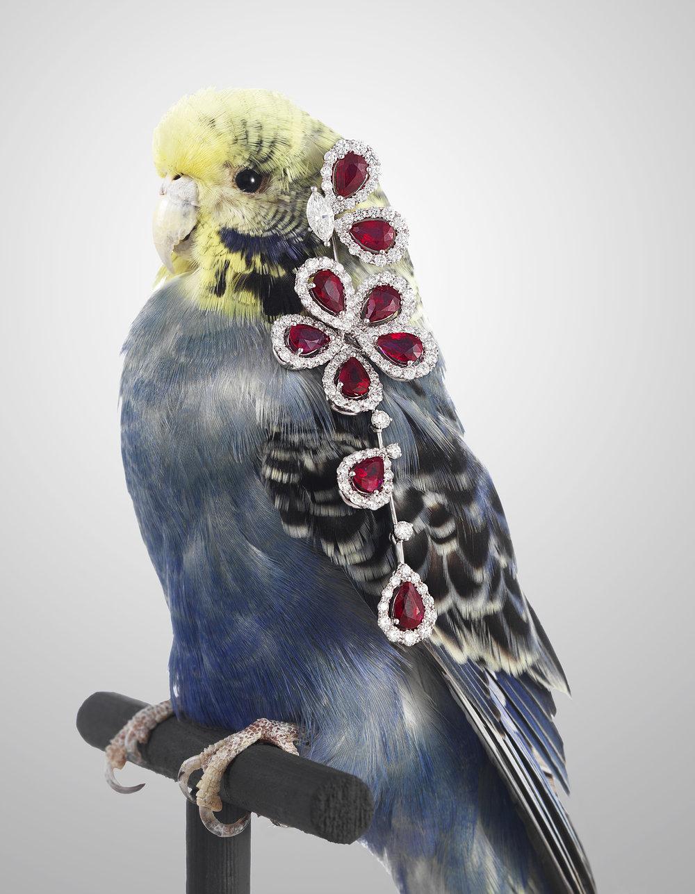 High Jewellery-budgey.jpg