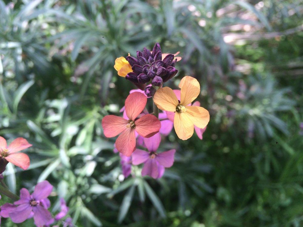 Walworth Garden plants