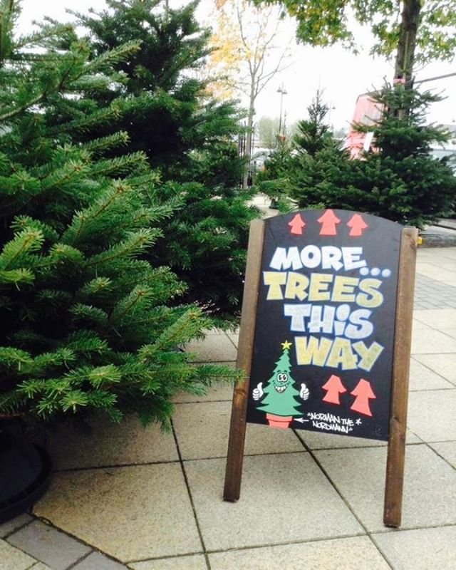 More trees please!! Come down and see us. Heaps of choice. We'll always find you the perfect tree 💚🎄 https://wetreekings.com/store-finder/ . . . . #realchristmastree #keepitreal #normanthenordmann #christmasdelivered #britishchristmastree #northampton #hackney #coventry #leamingtonspa #stratforduponavon #birmingham #edgbaston #hinckley #bromsgrove