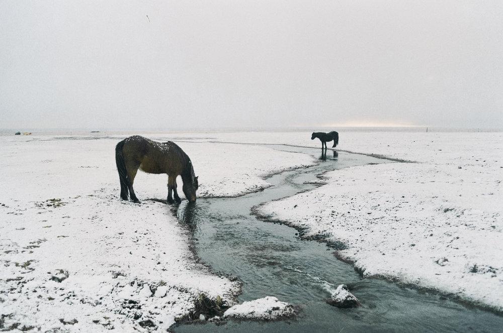 annadosenes-Travel Diary-Glacier-14.jpg