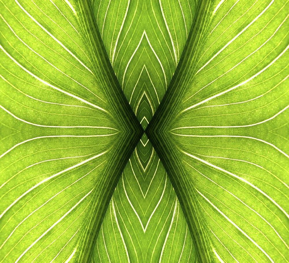 lily leaf.jpg