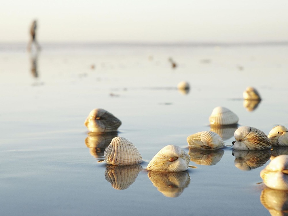 Shells - Pembrey Beach, Wales