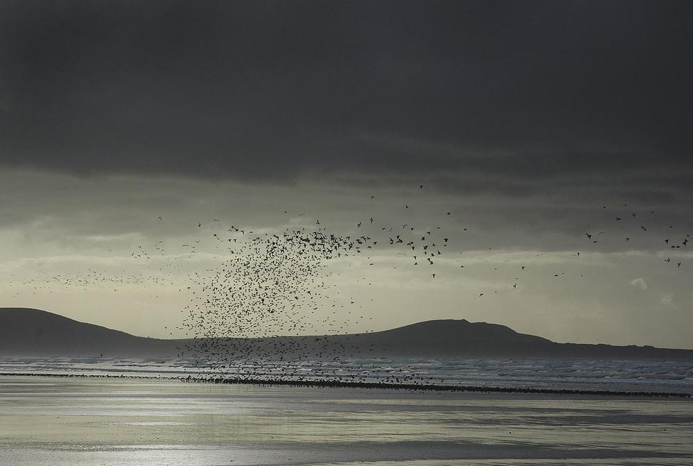 Birds - Pembrey Beach, Wales
