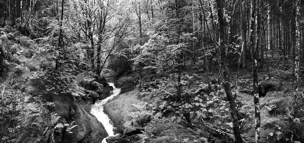 Forest Stream - Hendre Forest, Wales