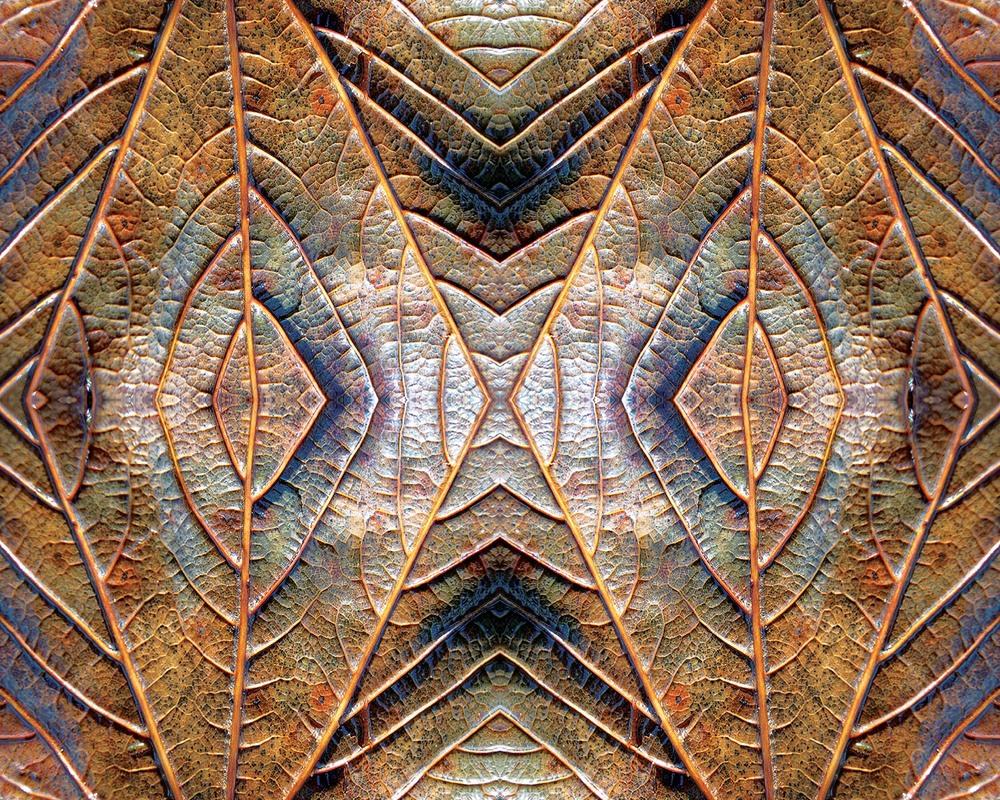 leaf upsize web.jpg