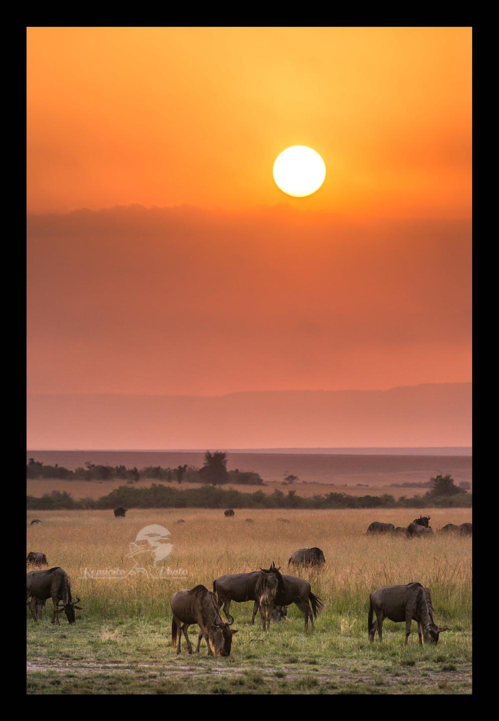 remicito photo 25-07-2016, July 25, 25th July, 25 Juillet, 25 de Julio, photo savane, photo afrique, photo safari afrique, photo safari kenya, photo safari tanzanie, photo afrique couleur, photo couleur kenya, photo couleur tanzanie, photo couleur Masai mara, photo serengeti, photo voyage afrique, photo voyage kenya, photo voyage tanzanie, photo savane afrique, photo savane kenya, Photo savane tanzanie, belle photo afrique, acheter photo afrique, tirage photo afrique, acheter photo kenya, acheter photo tanzanie, tirage photo safari, jolie photo savane, offrir photo afrique, acheter photo coucher de soleil,   color africa, color africa photo, kenya photograph, kenya savanna photo, tanzania photograph, kenya savanna photographs, tanzania savanna Photo, best africa shot, best africa photo, best sunset shot, best sunset photo, best sunset photograph, buy photo africa, africa gift photo, sunset gift photo, buy sunset photo, buy africa sunset photo,  foto africa regalo, comprar foto africa, offrecer foto africa, africa maravilla, africa linda, foto color, foto kenya, foto tanzania, puesta de sol, puesta del sol africa, puesta del sol sabana, puesta del sol Kenya, puesta del sol Tanzania,  photo couleur paysage, color photo, color photography, photo décoration mur, photo décoration chambre, photo décoration toilettes, cadeau décoration, idée cadeau décoration, idée cadeau pour lui, idée cadeau pour elle, idée cadeau photo mariage, idée cadeau photo nouvel appart, idée cadeau photo nouvel appartement, idée cadeau photo nouvelle maison, idée cadeau photo décoration, idée cadeau originale, idée cadeau fête des pères, idée cadeau fête des mères, idée cadeau naissance, idée cadeau anniversaire, idée cadeau anniversaire homme, idée cadeau anniversaire femme, idée cadeau noël, idée cadeau noel, idée cadeau grand-mère, idée cadeau grand-père, idée cadeau grands-parents, idée cadeau parents, idée cadeau enfants, idée cadeau adulte,  jolie photo,  offrir photo, offrir belle photo, o