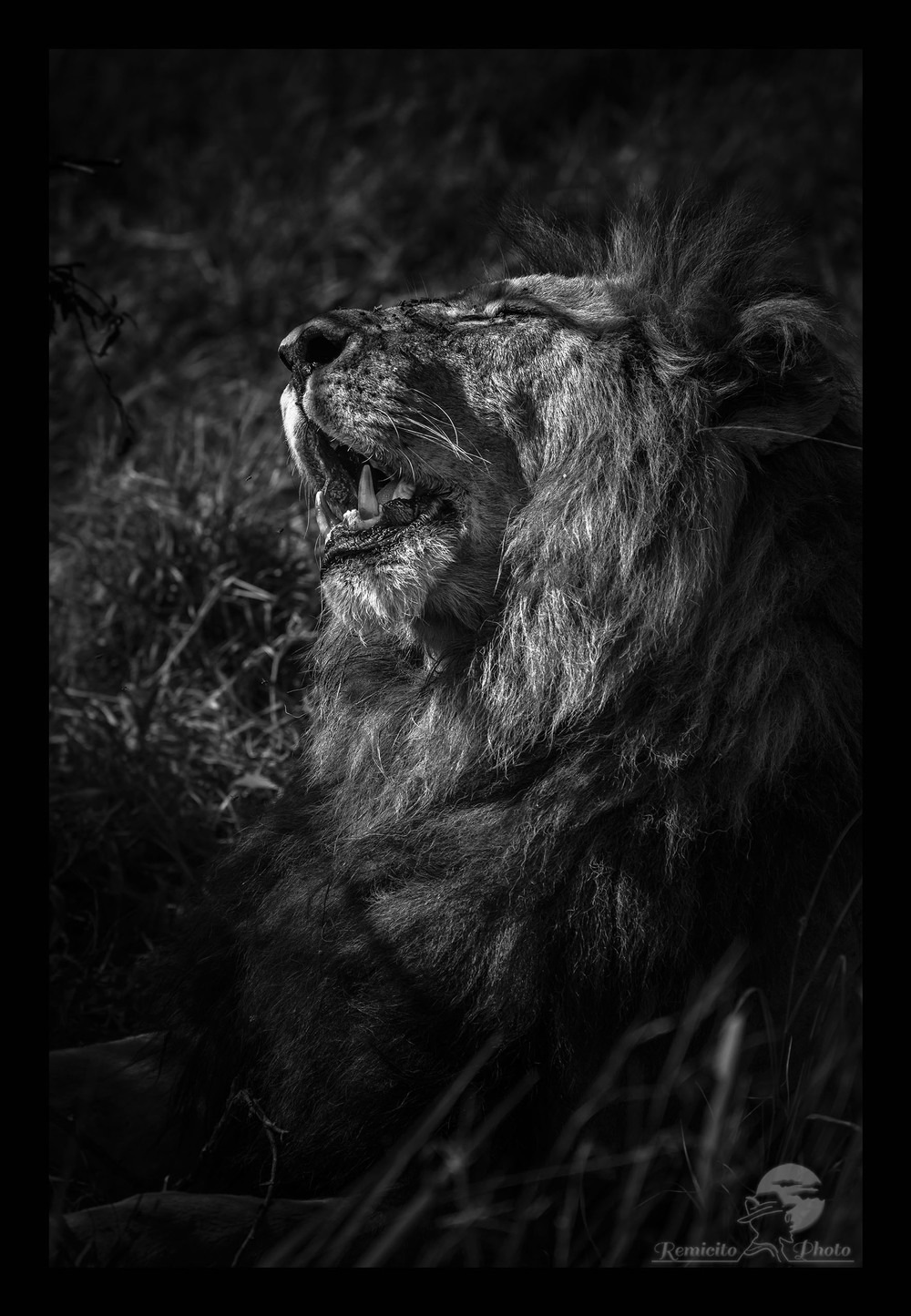 remicito photo 27-07-2016, July 27, 27th July, 27 Juillet, 27 de Julio, photo savane, photo afrique, photo safari afrique, photo safari kenya, photo safari tanzanie, photo afrique noir et blanc, photo noir et blanc kenya, photo noir et blanc tanzanie, photo noir et blanc Masai mara, photo serengeti, photo voyage afrique, photo voyage kenya, photo voyage tanzanie, photo savane afrique, photo savane kenya, Photo savane tanzanie, belle photo afrique, acheter photo afrique, tirage photo afrique, acheter photo kenya, acheter photo tanzanie, tirage photo safari, belle photo savane, offrir photo afrique, acheter photo lion, offrir photo lion, photo noir et blanc paysage,  Lion Africa, hunting Africa, black and white africa, black and white africa photo, kenya photograph, kenya savanna photo, tanzania photograph, kenya savanna photographs, tanzania savanna Photo, best africa shot, best africa photo, best lion shot, best lion photo, best lion photograph, buy photo africa, africa gift photo, lion gift photo, buy lion photo, buy africa Lion photo, black and white photo, black and white photography,  Foto Leon, foto africa regalo, comprar foto africa, offrecer foto africa, africa maravilla, africa linda, foto negro y blanco Leon, foto kenya, foto tanzania, leon africa, leon sabana, leon Kenya, leon Tanzania, offrecer foto negro y blanco,  photo décoration mur, photo décoration chambre, photo décoration toilettes, cadeau décoration, idée cadeau décoration, idée cadeau pour lui, idée cadeau pour elle, idée cadeau photo mariage, idée cadeau photo nouvel appart, idée cadeau photo nouvel appartement, idée cadeau photo nouvelle maison, idée cadeau photo décoration, idée cadeau originale, idée cadeau fête des pères, idée cadeau fête des mères, idée cadeau naissance, idée cadeau anniversaire, idée cadeau anniversaire homme, idée cadeau anniversaire femme, idée cadeau noël, idée cadeau noel, idée cadeau grand-mère, idée cadeau grand-père, idée cadeau grands-parents, idée cadeau parents, idée cadeau enfants, idée cadeau adulte,  jolie photo,  offrir photo, offrir belle photo, offrir photo couleur, offrir photo originale, offrir photo magnifique, offrir photo pour décorer, offrir photo décoration, beautiful color photo, buy photo landscape, gift idea, present idea, present idea father, present idea mother, present idea parents, mother gift idea, father gift idea, parents gift idea, grand parents gift idea, beautiful photo, beautiful photograph, nice photograph, idea regalo padre, idea regalo madre, idea regalo boda, idea regalo cumpleaños, idea regalo cumpleanos, foto regalo, comprar foto decoracion, comprar foto linda, offrecer foto linda