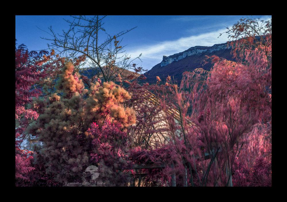 remicito photo , photo paysage, photo Hautes-Alpes, infrarouge photo, infrared photography, acheter belle photo, idée cadeau, photo déco, décoration, belle photo, belle image, beau paysage, belle France