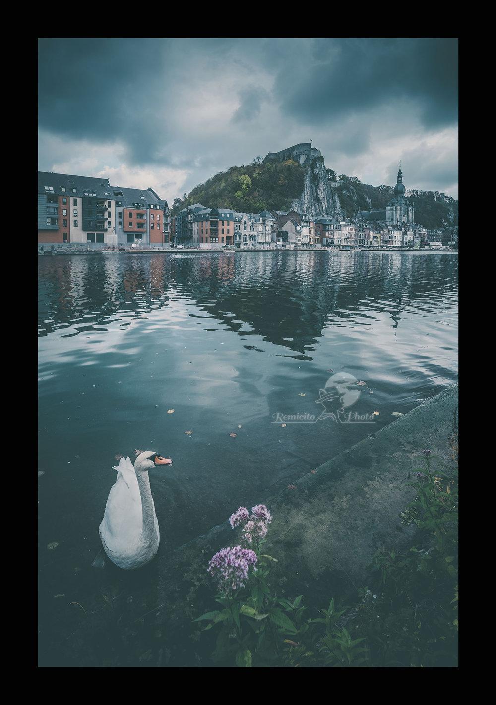 Remicito photo, image du jour, photo du jour, photo Dinant, photo Belgique, photo cygne, swan photography, dark photography, Terres obscures, Dark Lands, Tierras oscuras, belle photo, idée déco, cadeau photo, belle photo rivière