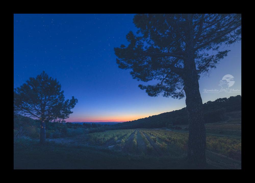remicito photo, image du jour, route des vins, photo du jour, photographe français, photo vignes, coucher de soleil, sunset photography, idée cadeau pour lui, idée cadeau pour elle, idée cadeau déco, idée déco, gift idea