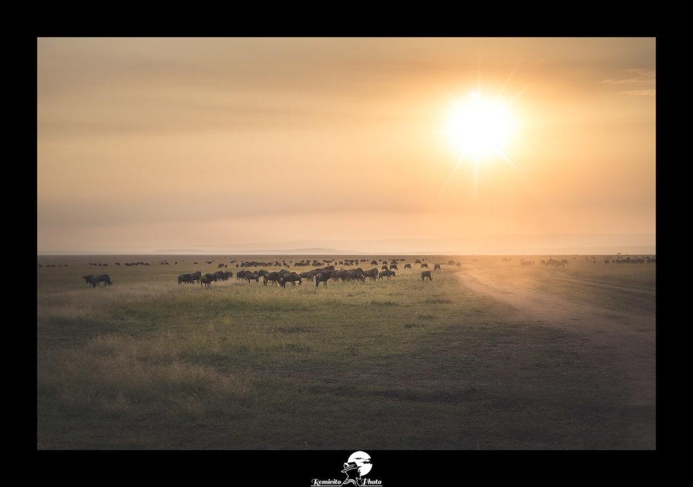 remicito photo, photo du jour, photo of the day, image of the day, photo coucher de soleil kenya, sunset kenya, parc masai mara, belle photo, meilleur photographe français, french photographer, best french photographer, idée cadeau, idée déco