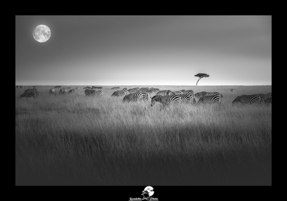 remicito photo, photo du jour, photo of the day, image du jour, photo noir et blanc, photo masai mara, photo safari kenya, photo voyage kenya, belle photo noir et blanc, photo zèbre, photo lune, meilleur photographe français, photographe de voyage français, french photographer, idée cadeau, idée déco, black and white photography zebra