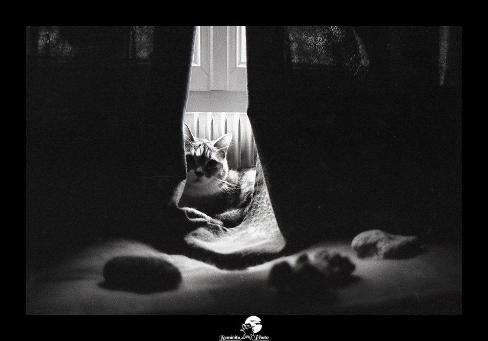 remicito photo, image du jour, photo du jour, photo of the day, black and white, photo noir et blanc, photo argentique, belle photo, french photographer, photographe français, film photography, cat photo, photo chat noir et blanc
