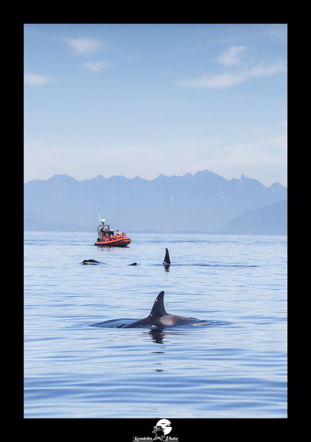 remicito photo, image du jour, photo du jour, photo of the day, meilleur photographe, français, best french photographer, photo orque canada, killer whale canada, vancouver island killer whale