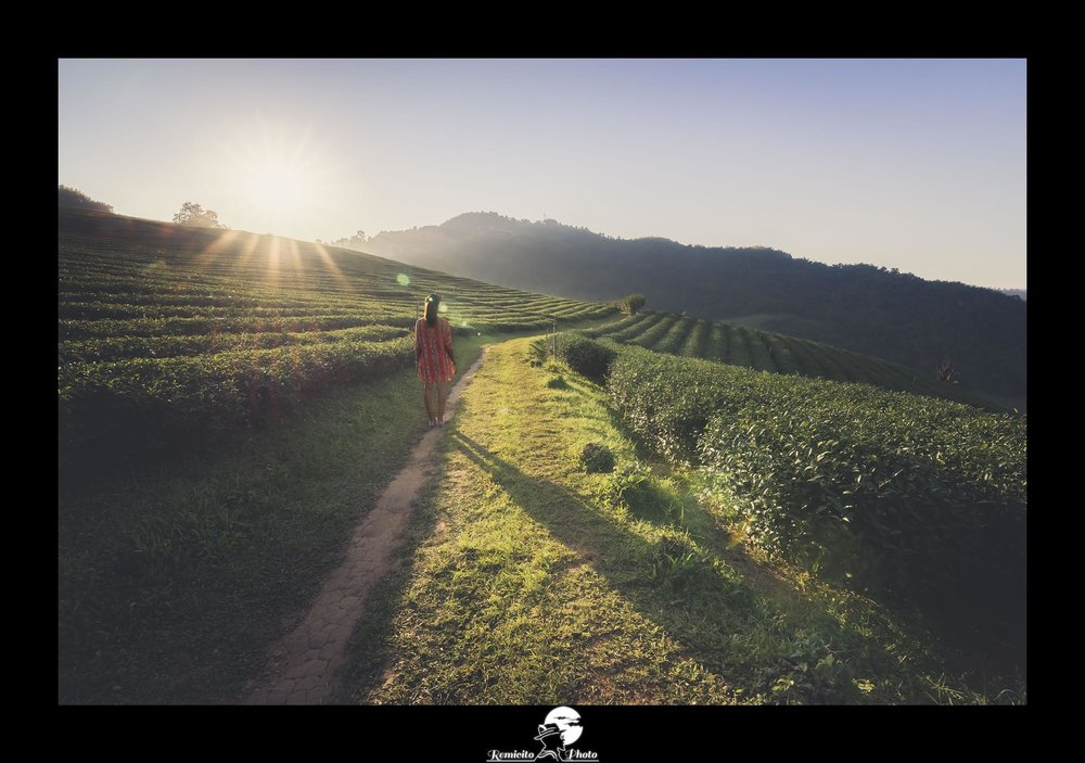 remicito photo, remicito, image du jour, photo du jour, photo of the day, champs de thé thaïlande, tea fields Thailand, belle photo voyage thailande, idée cadeau, french photographer, sunset photography thailand