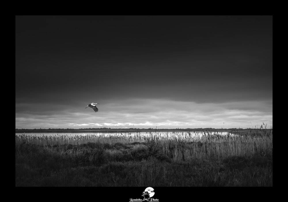 Remicito photo, remicito, image du jour, photo du jour, photo of the day remicito, belle photo noir et blanc cigogne camargue, belle photo oiseau vol sud de la france, idée cadeau belle photo