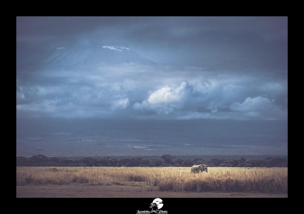 Remicito photo, remicito, rémi lacombe remicito photographe belle photo afrique, idée cadeau belle photo kilimanjaro, afrique éléphant kilimanjaro kenya tanzanie, idée cadeau tirage photo afrique éléphant