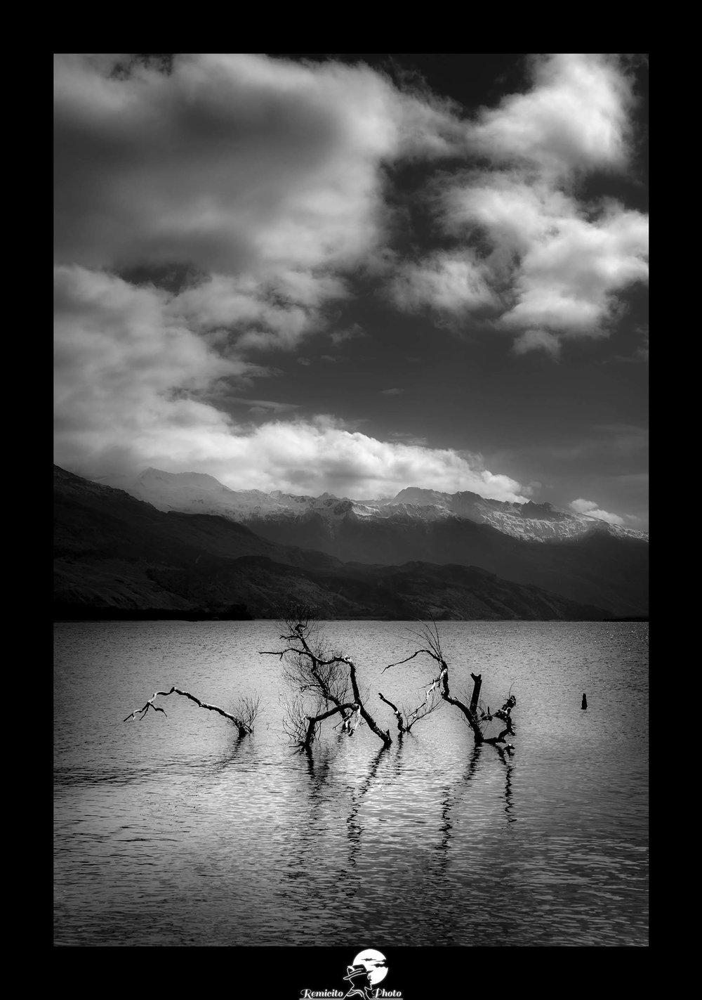 Remicito photo, remicito rémi lacombe photographe paris, belle photo idée cadeau noir et blanc, arbre lac noir et blanc
