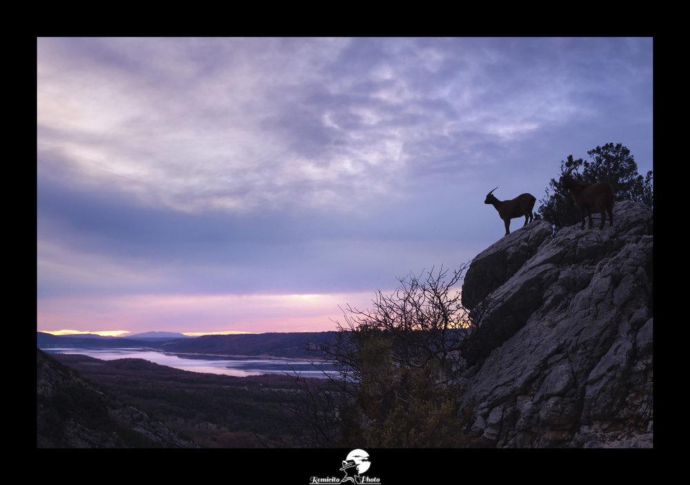 Remicito photo, remicito rémi lacombe photographe paris, belle photo gorges du verdon chèvre coucher de soleil, idée cadeau photo gorges du verdon coucher de soleil, chèvre bouc rocher photo