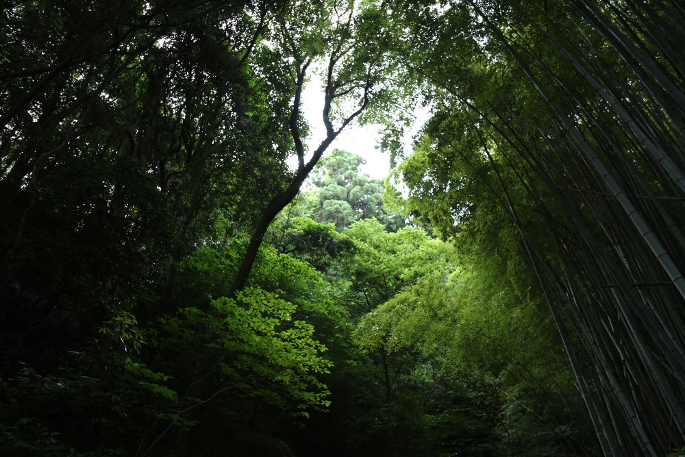 Bamboo forest on Suo Oshima, Seto Nai Kai - South Japan