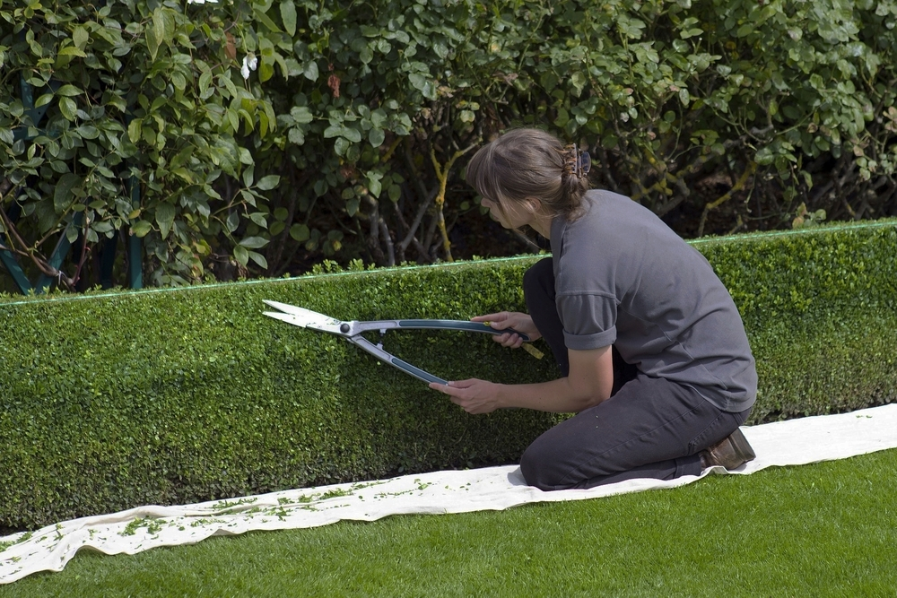 Close to the Hedge   Good hedges make good neighbours. We're experts in keeping your hedge healthy and neat.