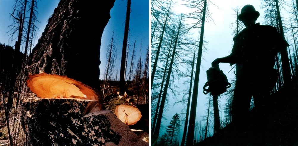 Forestdefenders3.jpg