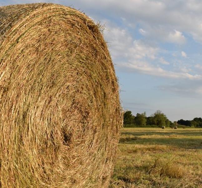 hay-1490448__480.jpg