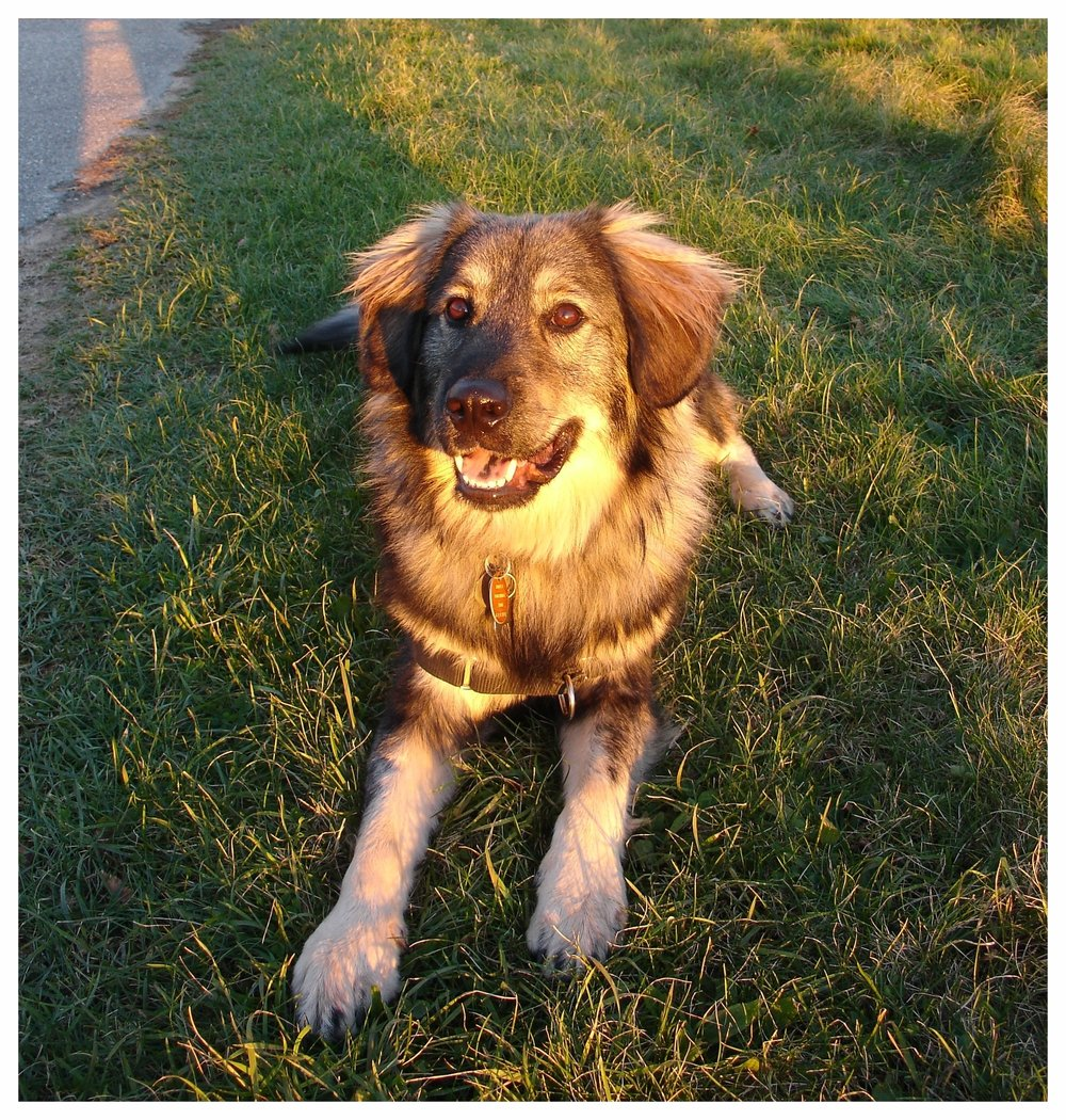 Dog Training and Manners
