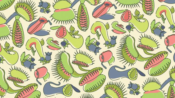 Carniflorous pattern