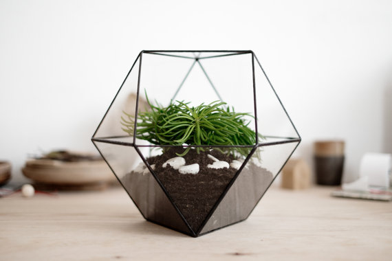 Glass Planter by BoxwoodTree