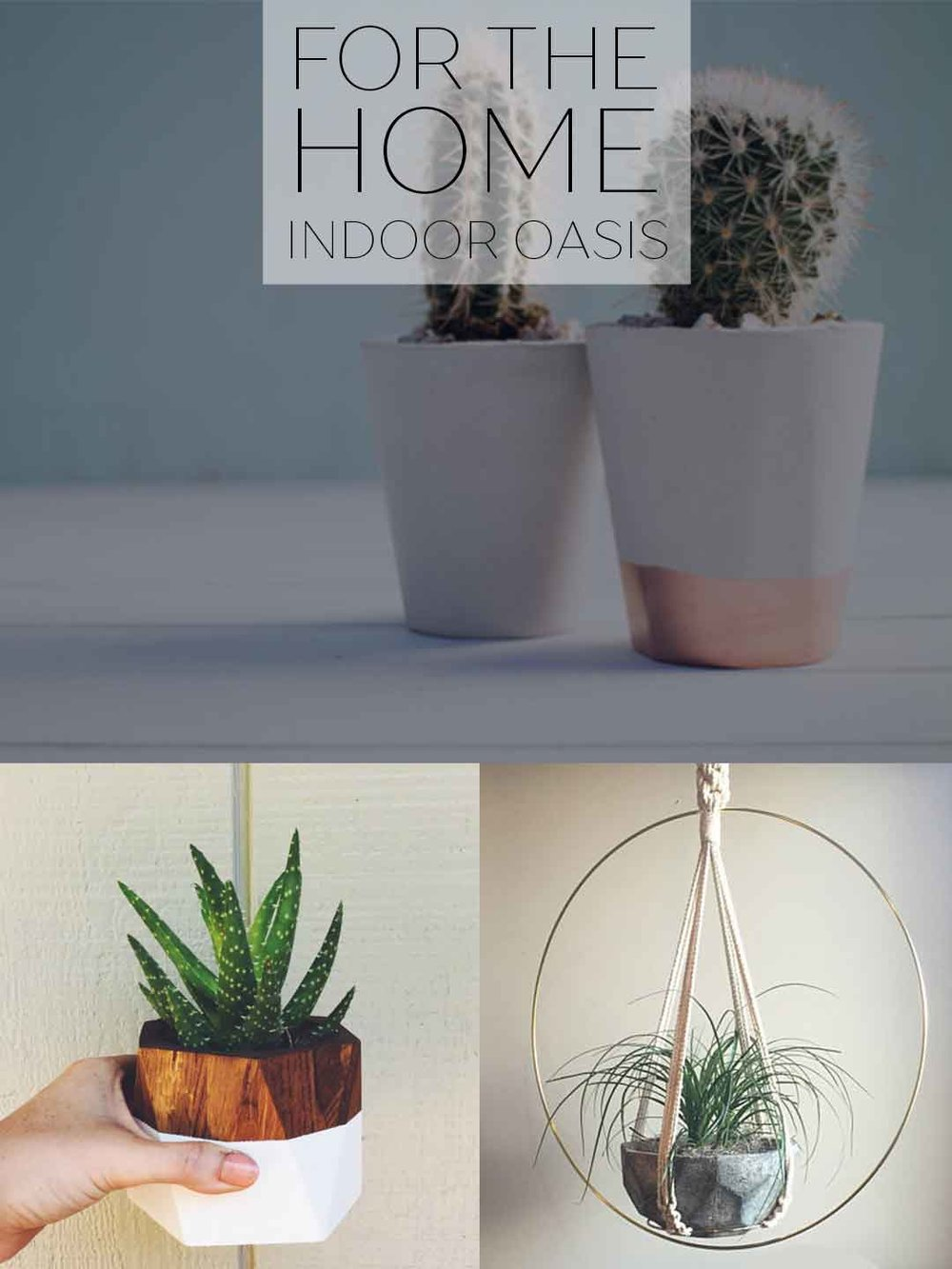 For the Home: Indoor Oasis