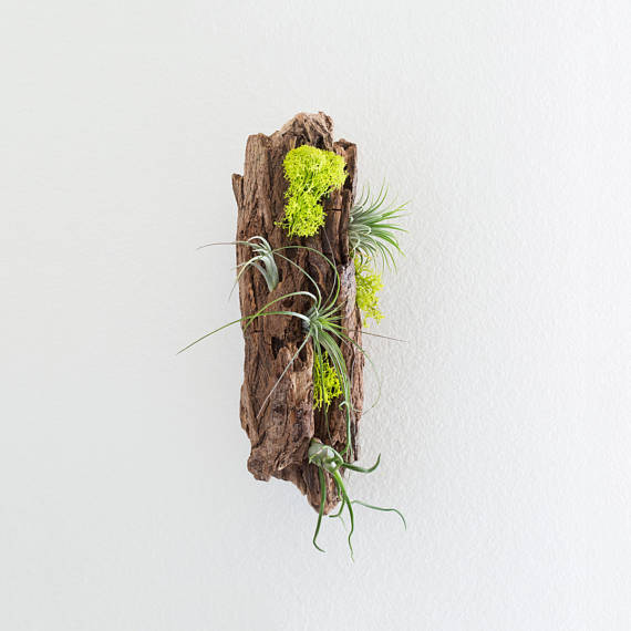 Planted Driftwood Display by WoodInspireShop