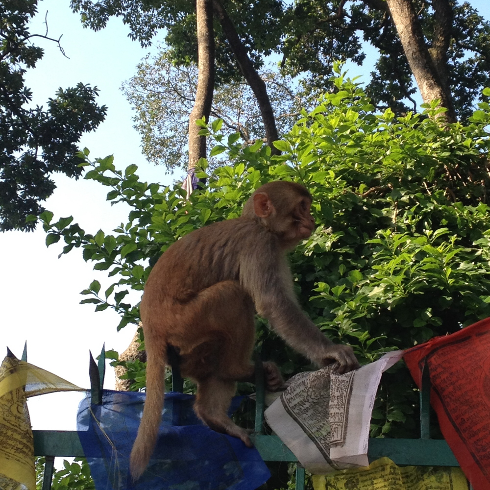 monkey and prayer flags.jpg