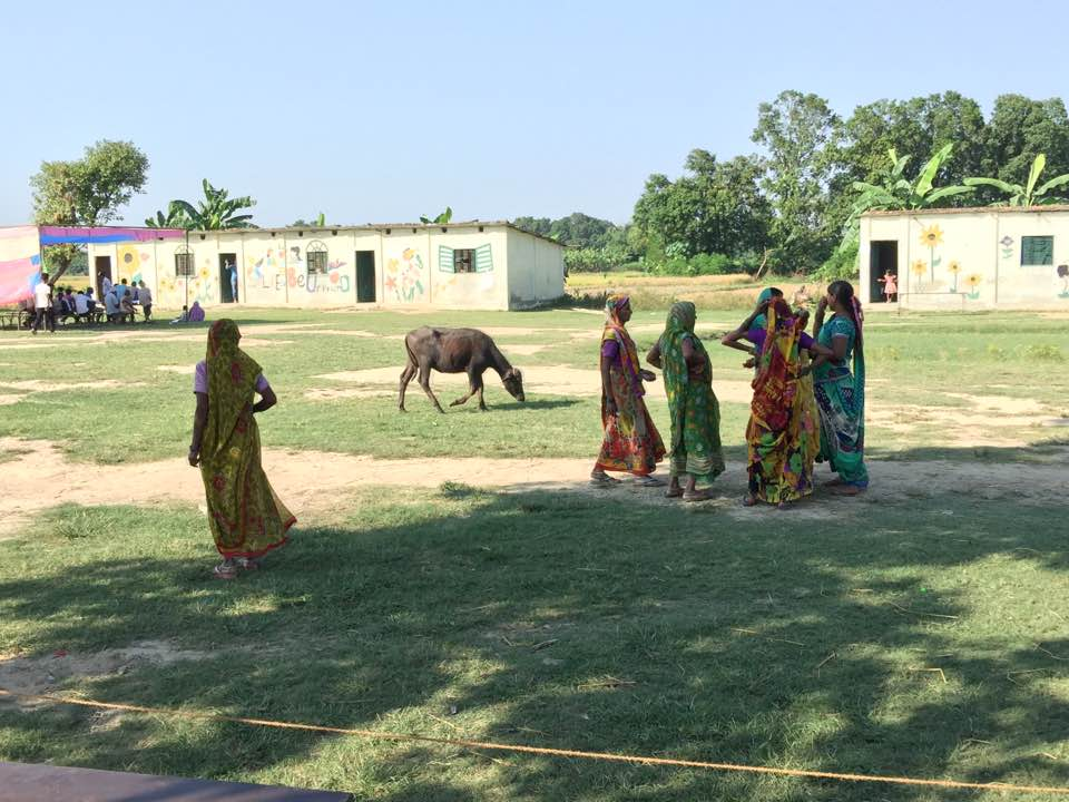 2016 Cows and Saris.jpg