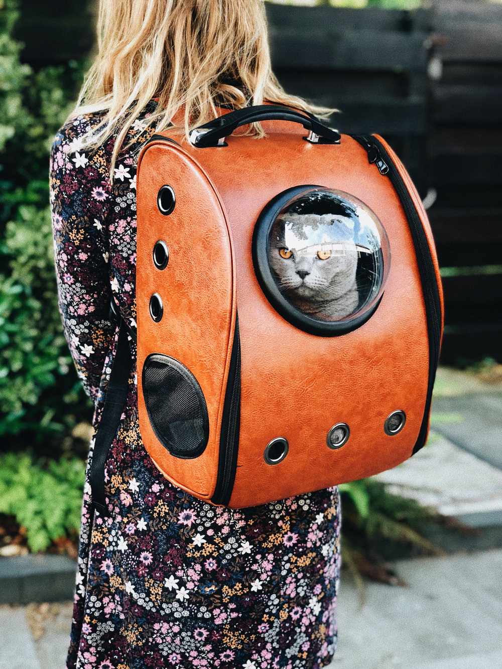 Health Certificates For Travel - We can provide health certificates permitted by our USDA-APHIS accredited veterinarian for domestic travel (excluding Hawaii and Alaska). Our office can also submit titer testing and other necessary lab tests sometimes required. Be aware that rules and regulations pertaining to animal transport intra-state change often and our office cannot be held responsible for incorrect certificates or forms you request from us. Similarly, the timing of tests and expiration dates on paperwork can be critical when traveling with an animal. It is highly recommended that you contact USDA-APHIS and the USDA-APHIS veterinarian at the airport if you plan to fly for the latest requirements. Due to the complexities of these health certificates we are only able to assist with health certificates for domestic travel (excluding Alaska and Hawaii). We also highly recommend that your pet travel in the cabin with you and never as cargo. It is our position that cargo pet travel can present serious dangers for your pet and it is not a mode of pet travel that we endorse.