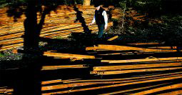 Dean J. Koepfler | The News Tribune From company town to planned community - former DuPont resident Gary Lucas of Lacey looks at narrow gauge railroad ties from the line that hauled explosives from the DuPont explosive plant to a wharf for shipping.
