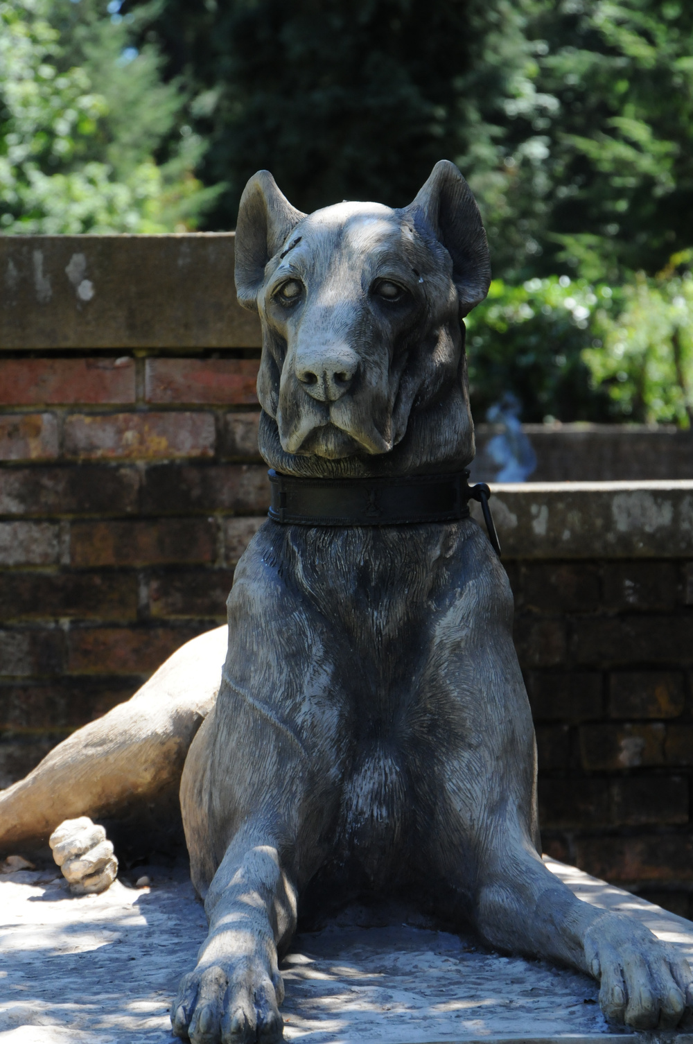 Kingsale Hound From England.jpg