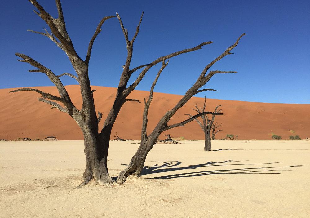 Petrified trees, Sossusvlei, Namibia
