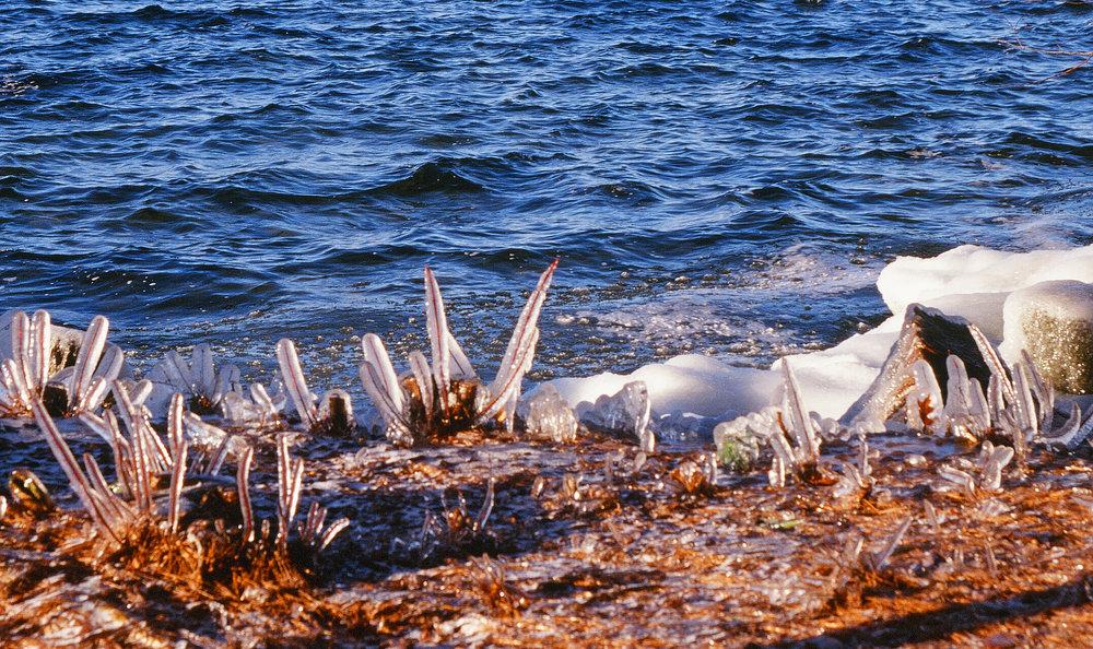 Ice stems