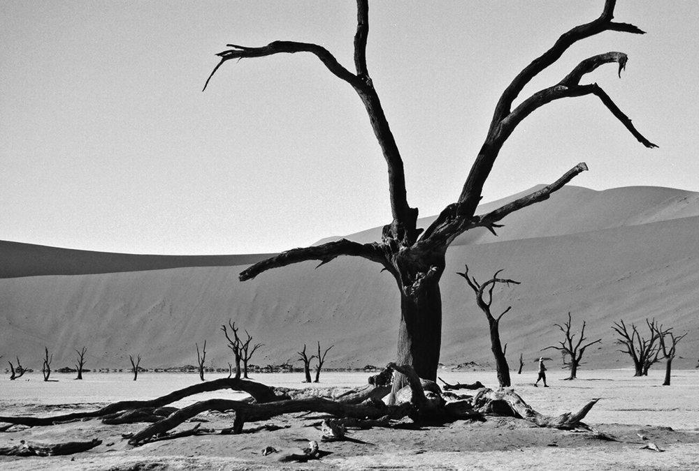 Petrified in the Namibian desert