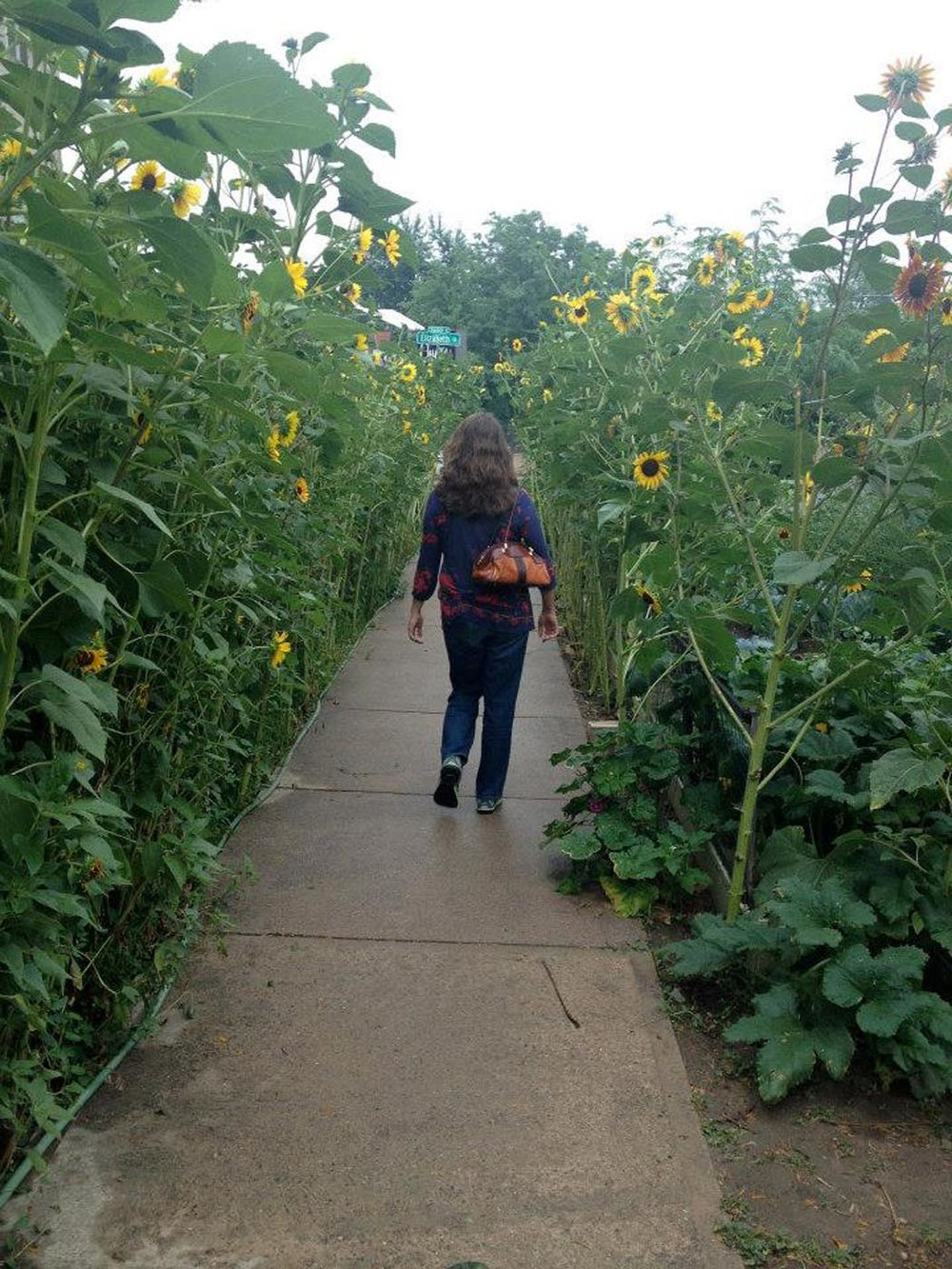 Sunflowers along Elizabeth Street in Denver. Photo courtesy of Elizabeth O'Herrin