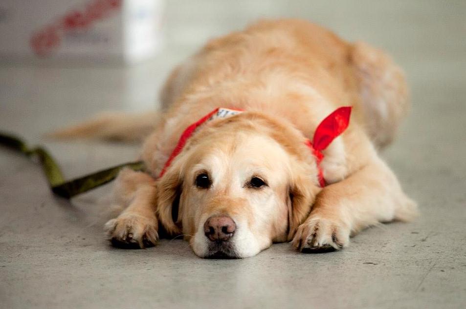 Liesel Kershul Marines Amber Dog