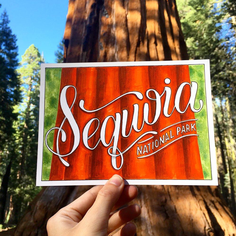 OlgaMuzician_Sequoia.jpg