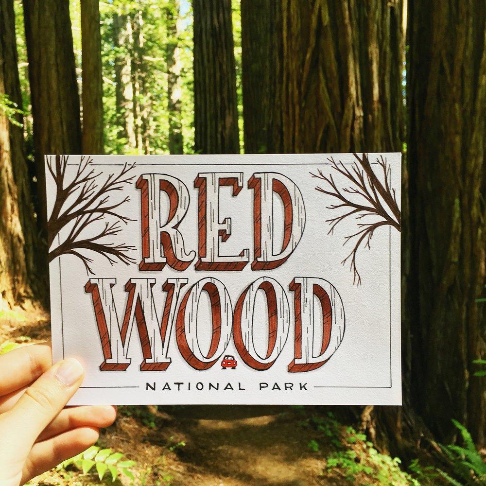 OlgaMuzician_Redwood1.jpg