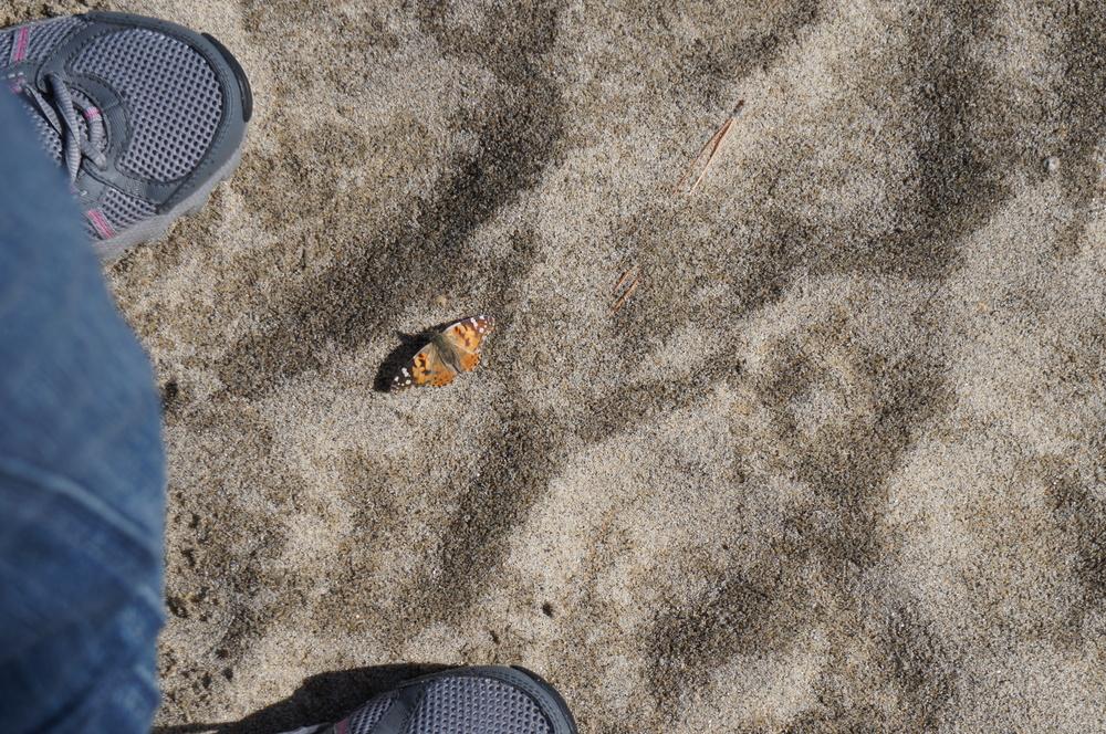 Butterfly resting between my feet - Lake Tahoe, April 2012