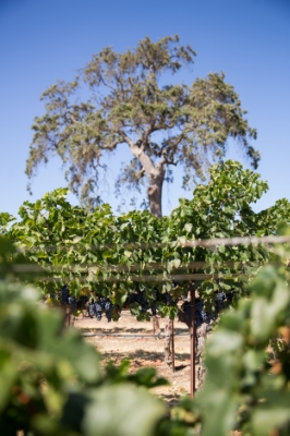 Pasos-Best-Wines-2014-045.jpg