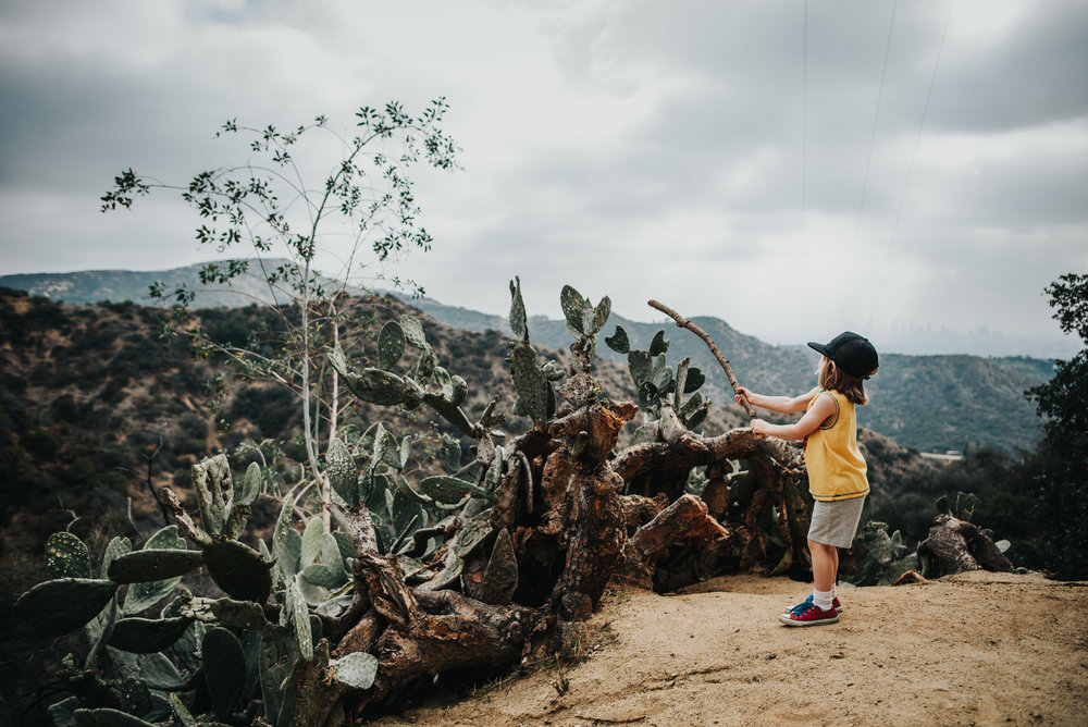 Little boy explores cactus during a hike in the mountains of Hollywood, California.
